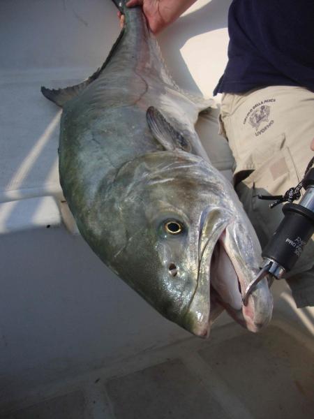 La grande leccia a portata di 39 39 barchetta 39 39 for Barchetta da pesca